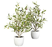 18 Set of 2 Olive Tree with Vases by Nearly Natural - H357344