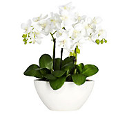 Phalaenopsis Flower Arrangement by Nearly Natural - H357346