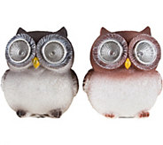 Pure Garden Solar Light & Battery-Operated 2-Piece Owl Statue - H293147