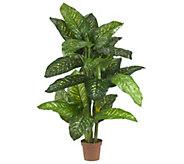 5 Dieffenbachia Silk Plant by Nearly Natural - H309751