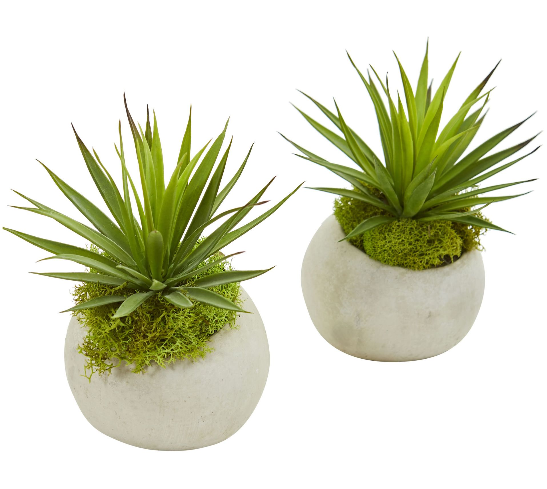 Spiky Agave Plant In Planter Set Of 2 By Nearly Natural Qvc Com