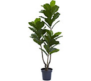 65 Indoor/Outdoor Fiddle Leaf Tree by Nearly Natural - H295178