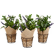 Set of (3) 11 Potted Herbs with Burlap by Valerie - H214481