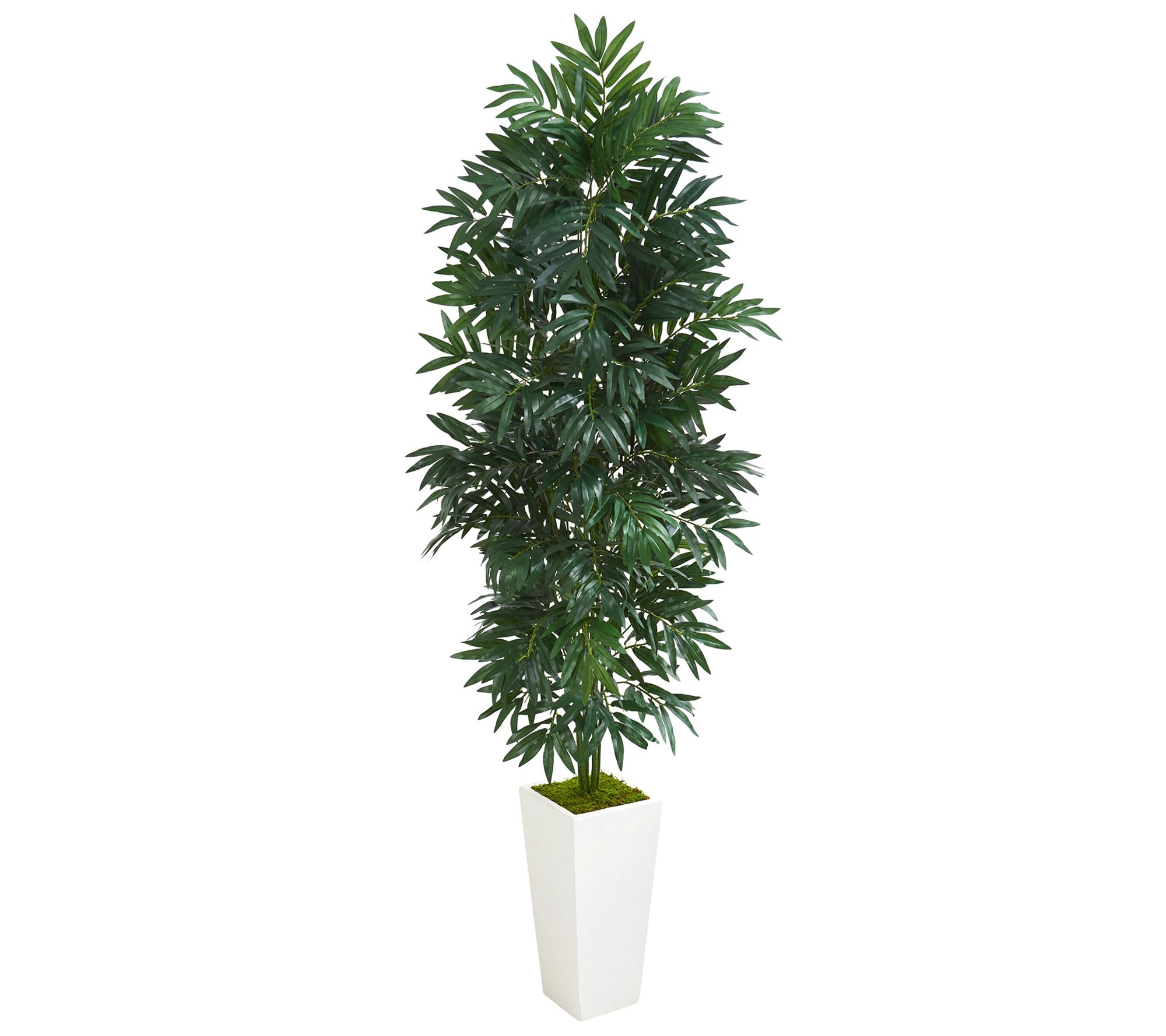 5 Bamboo Palm Plant In Planter By Nearly Natural Qvc Com