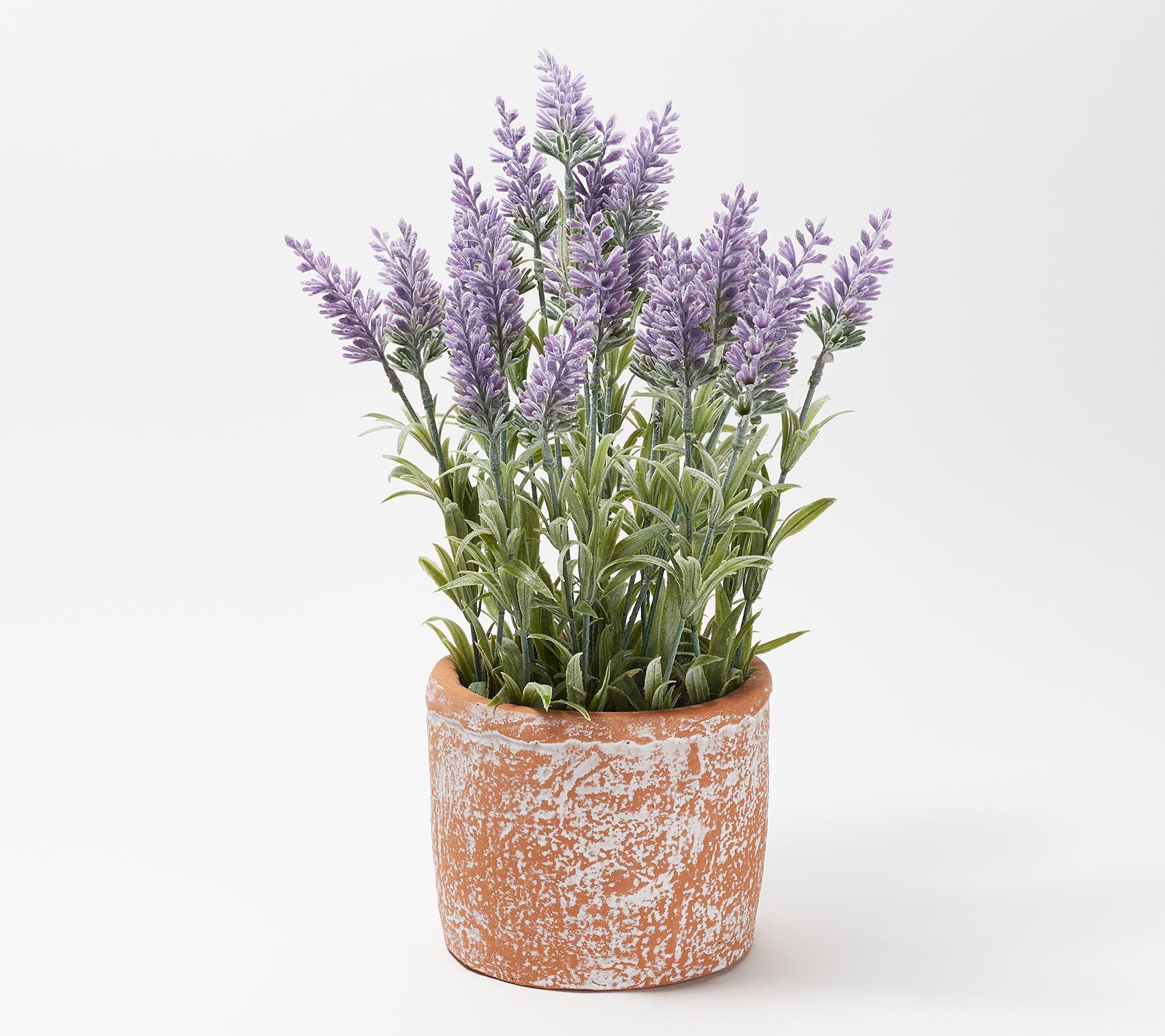 Wicker Park Faux Potted Lavender Plant Qvc Com