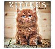 2019 Kittens Wall Calendar - M120734