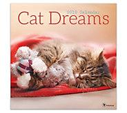 2019 Cat Dreams Wall Calendar - M120750
