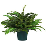 National Tree 20 Faux Fern with Growers Pot - M55950