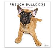 2019 French Bulldogs Wall Calendar - M120756
