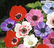 Robertas 100-Piece Spring Daisy Windflowers - M59458