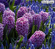 Robertas 50-Piece Purple Rain Spring Garden - M59460