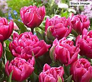 Robertas 50- Piece Think Pink Spring Garden - M59461