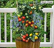 Cottage Farms Little Sicily 5-in-1 Patio Vegetable Garden - M61565