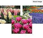 Robertas All Inclusive Spring Garden - M59467