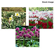 Robertas 268-Piece Dreams of Spring Garden - M60271