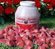 Cottage Farms Bud N Flower Rose Booster Fertilizer Packs - M7574