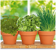 Cottage Farms Herb Trio Seed Kit - M120476