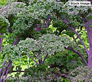 Robertas 6-Piece Tasty Kale Collection - M61288