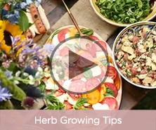 Herb Growing Tips
