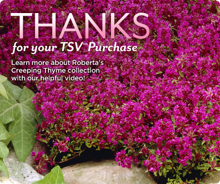 Roberta's 8-pc. Tread on Me English Creeping Thyme Collection