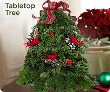 Fresh balsam tabletop tree by Valerie Parr Hill
