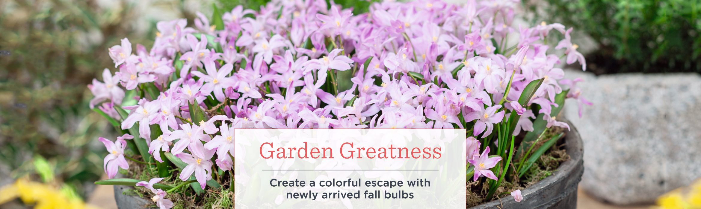 Garden Greatness  Create a colorful escape with newly arrived fall bulbs