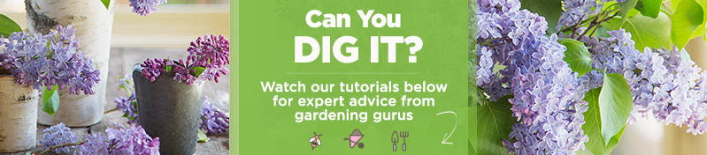 Can You Dig It? Watch our tutorials below for expert advice from gardening gurus