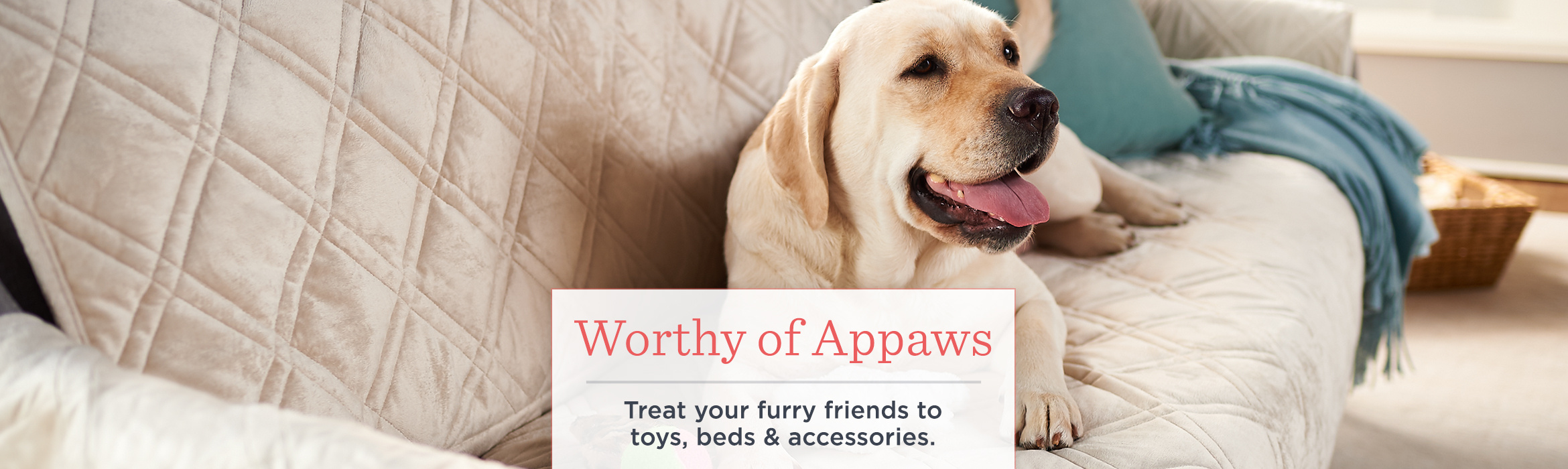 a752da427494 Worthy of Appaws - Treat your furry friends to toys