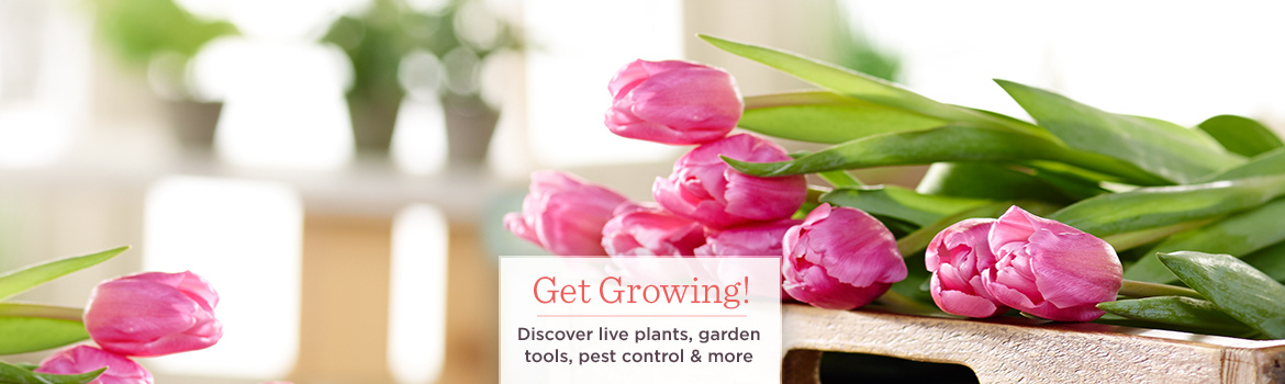 Get Growing! Discover live plants, garden tools, pest control & more