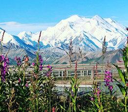 The Alaska Collection