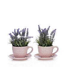Bluebird & Bramble Set of 2 Lavender in Honey Bee Tea Cup